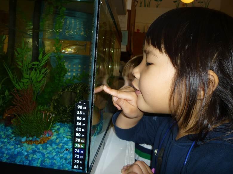 Preschool_fishtank